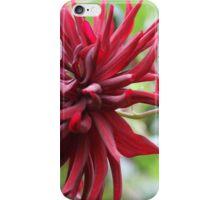 Red Dahlia  iPhone Case/Skin
