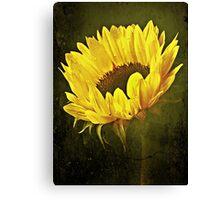 Petals Of A Sunflower. Canvas Print