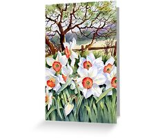 Narcissi in a field Greeting Card