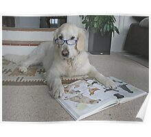 Ditte is studying a book about dogs!! Poster
