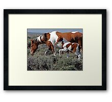 Wild Pinto Foal, Red Desert, Wyoming Framed Print