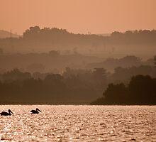 Pelicans on Lake Tana by Karen Millard