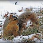 In The Snow by Linda Miller Gesualdo
