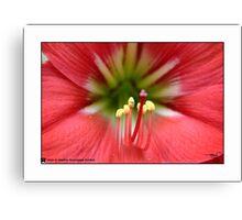 Macro Lilly-1 Canvas Print