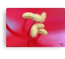 Macro Lilly-2 Canvas Print