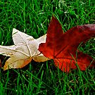 Leaves on a bed of Lawn by naddyt