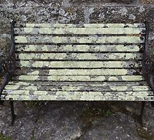 Lichen on a bench by DEB VINCENT