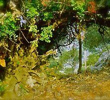 Quercus ilex . Corfu . Greece . by Brown Sugar . Views (103) thank you ! by © Andrzej Goszcz,M.D. Ph.D