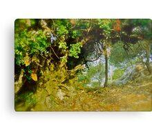 Quercus ilex . Corfu . Greece . by Brown Sugar . Views (103) thank you ! Metal Print