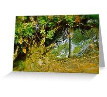 Quercus ilex . Corfu . Greece . by Brown Sugar . Views (103) thank you ! Greeting Card
