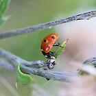 Ladybug by RosiLorz