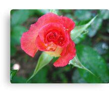 Ruby Red sparkler Canvas Print