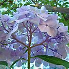 Floral Hydrangea Flowers Botanical Garden art by BasleeArtPrints