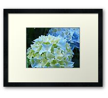 Beautiful Blue White Hydrangea Flower art prints Baslee Troutman Framed Print