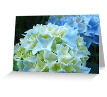 Beautiful Blue White Hydrangea Flower art prints Baslee Troutman Greeting Card
