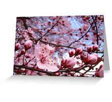 Spring Trees Landscape Pink Blossoms Blue Sky Greeting Card