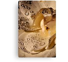 Golden jewels on a silky soft rose petal Canvas Print