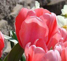 Tulips Flower Garden Spring Floral art Baslee Troutman by BasleeArtPrints