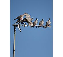 Birds On A Wire... err... Antenna Photographic Print