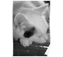 Tom-cat Poster