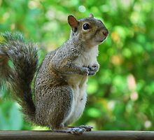 Excuse please, can spare a peanut? by Ben Waggoner