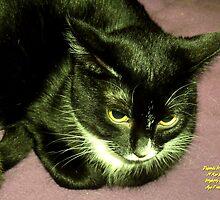 "IittyBitty Kitty sez: ""It's Doubtful"" by Dayonda"