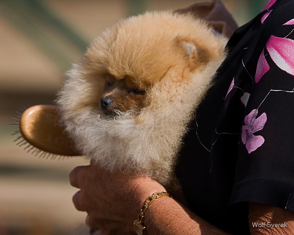 Cute dog by Wolf Sverak