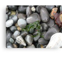 Pebble Beach Canvas Print