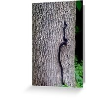 Snakes Alive! Greeting Card