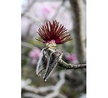 Spent Magnolia Photographic Print