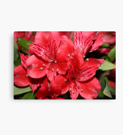Favorite Flower Canvas Print
