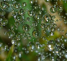 spider's bubbles by kennebrew