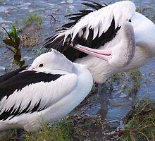 Pelican Pruning by Kymbo