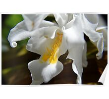 White Orchids at the Conservatory Poster
