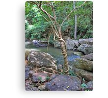 Tree strangles another tree Canvas Print