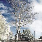 Infrarouge -  Infrared tree by vanyahaheights