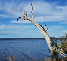 Tree over water by JulietWhiskey