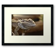 'The Lizard of OZ' Framed Print