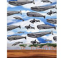 Dreaming of Whales in the Desert (Carnivalesque Collage Series) Photographic Print