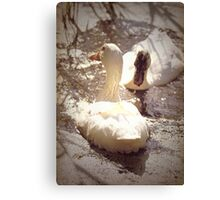 Two Little Ducks Canvas Print