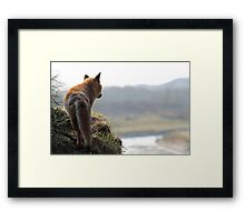 Red Fox overlooking his kingdom Framed Print