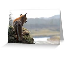 Red Fox overlooking his kingdom Greeting Card