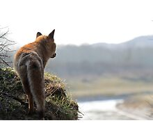 Red Fox overlooking his kingdom Photographic Print