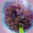 Purple Light by artitutti