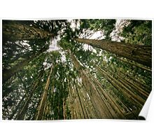 Woods Forest Trees photo Poster