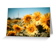 Yellow Sunflowers Macro Greeting Card