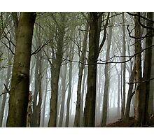 Misty trees - Wirlow, Sheffield, 6th May Photographic Print