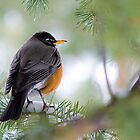 Red, Red Robin by Mike Hendren