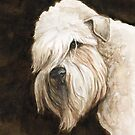 Soft Coated Wheaton Terrier by Charlotte Yealey