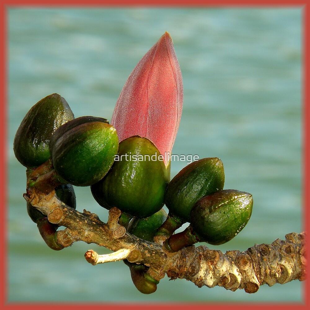 Spring by artisandelimage